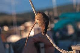 rat-1-rope